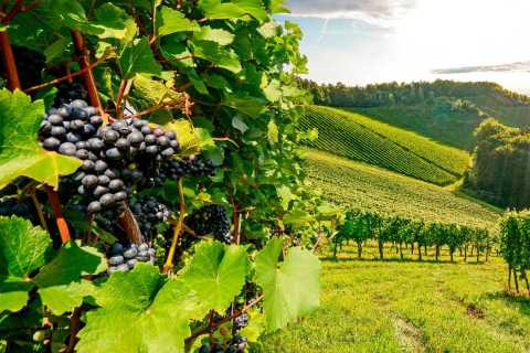 De Sesimbra: Excursão Cultura Arrábida e Degustação de Vinho