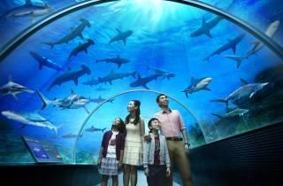 Singapur: S.E.A. Aquarium 1-Tages-Pass mit Hotelabholung
