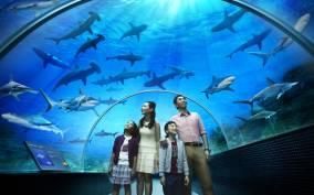 Singapore: S.E.A. Aquarium 1-Day Pass with Hotel Pickup