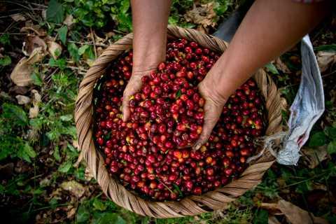 Aquiares Estate: 2-Hour Coffee Tour With Tasting
