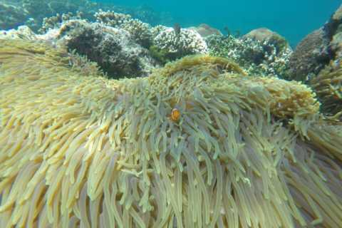 Bali: Labuan Amuk Snorkeling with Lunchbox