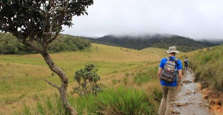 Nuawara Eliya: Horton Plains and Tea All-Inclusive Tour