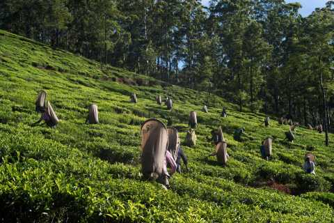 Nuwara Eliya: All-Inclusive Private Sightseeing Day Tour