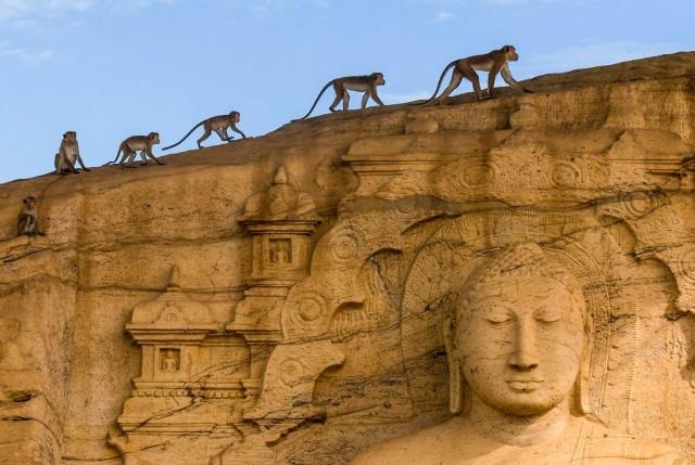 Dambulla: all-inclusive tour van Polonnaruwa en Sigiriya