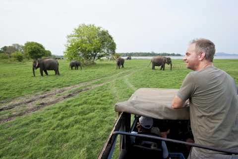 All-Inclusive Minneriya National Park Afternoon Safari