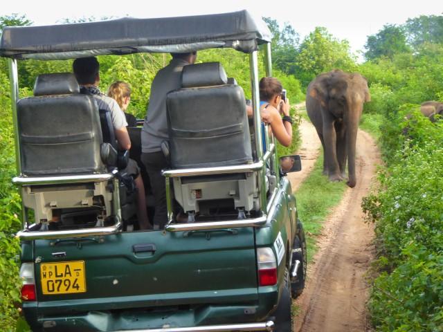 Van Galle of Mirissa: Yala Safari met lunch op de camping