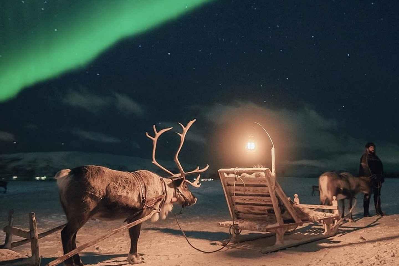 Tromsø: Rentierschlitten, Dinner & Chance auf Nordlichter