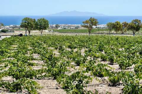 Santorini: Wine Tasting Tour & Sunset Viewing