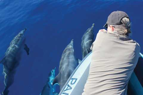 Madeira Island: Whale and Dolphin Watching