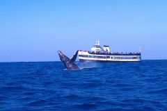 San Diego: Whale Watching Tours