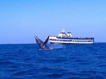 San Diego: Walbeobachtungs-Tour