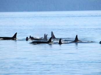 Vancouver: Walbeobachtung in Victoria mit dem Wasserflugzeug