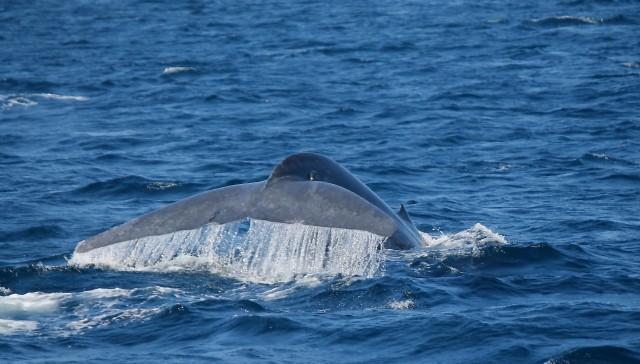 Mirissa: ochtendtrip walvissen spotten