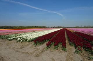 Von Amsterdam: Flower Fields Private Tour