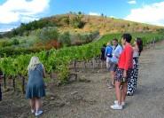 Ab Florenz: Chianti-Wein-Tour mit Mittagessen