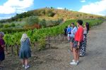 From Florence: Small Group Chianti Wine Tour with Lunch