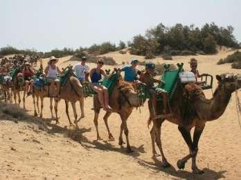 Gran Canaria: Kamelritt in den Dünen von Maspalomas