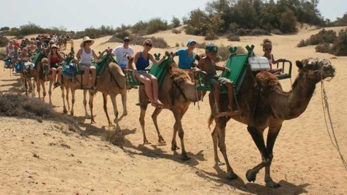 Gran Canaria: Camel Ride in the Dunes of Maspalomas