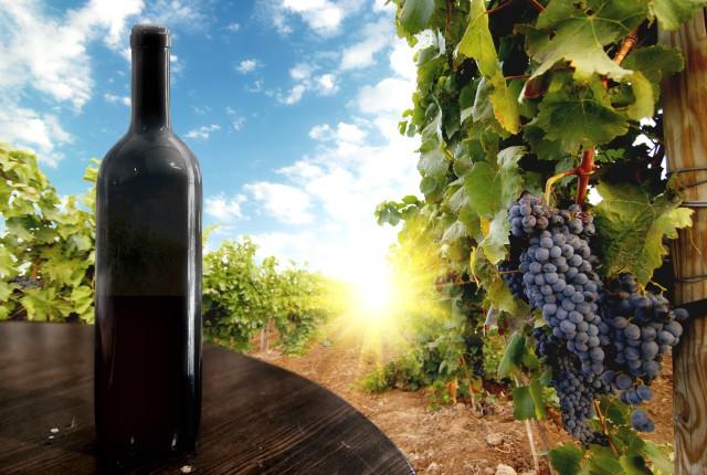 Kutaisi: Regionale wijntour