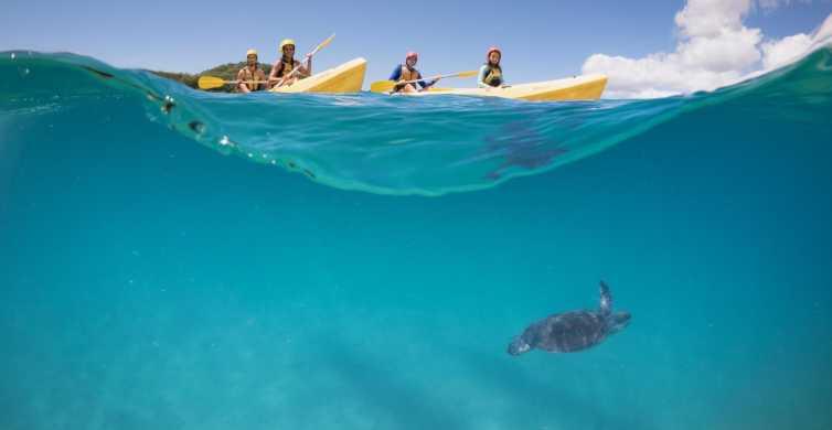 Byron Bay: Kajaktour mit Delfinen