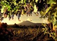 Ab Pompeji: Weinverkostungen am Vesuv und Mttagessen