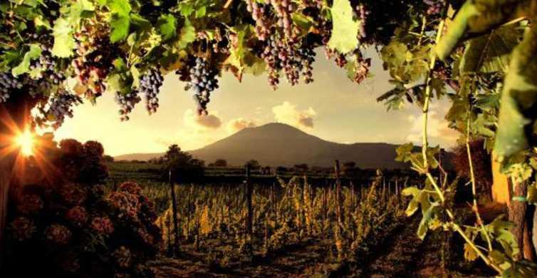Mount Vesuvius Wine Tasting and Lunch from Pompeii