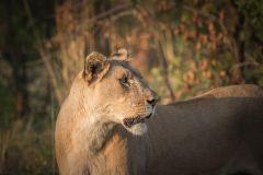 Pilanesberg: Safári em Veículo Aberto