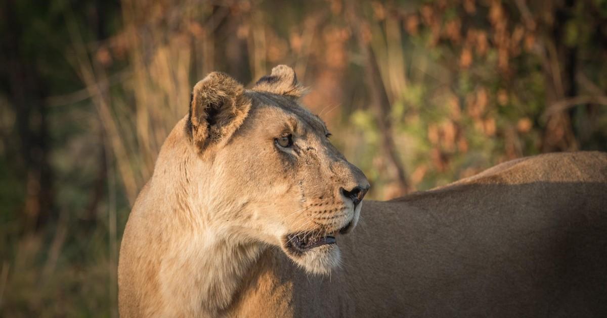 Full-Day Pilanesberg Game Reserve Safari With Closed Vehicle