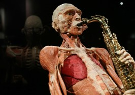 What to do in Amsterdam - Body Worlds Amsterdam: The Happiness Project Ticket