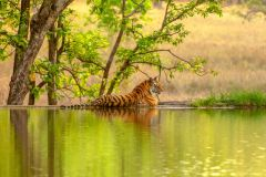 De Jaipur: Ranthambore Tiger Safari Private Day Trip