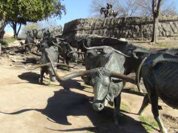 Willkommen in Dallas: Kleingruppentour per Van