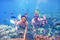 De Dubai: Snorkeling Trip para Fujairah com Live BBQ Lunch