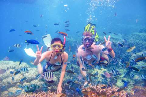 From Dubai: Snorkeling Trip to Fujairah with Live BBQ Lunch