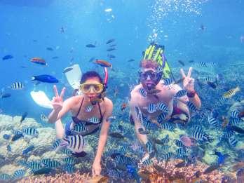 Ab Dubai: Schnorchel-Tour nach Fudschaira mit Barbecue