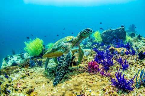 Fujairah: 2-Tank Shipwreck Diving Experience