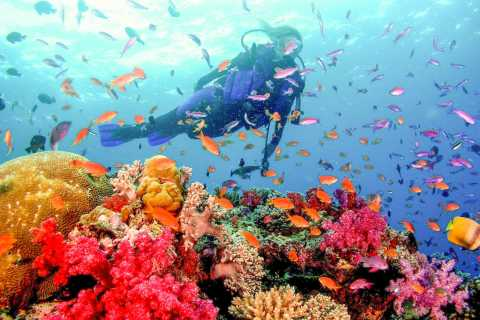 Dubai: PADI Open Water 18-Meter Diving Certification