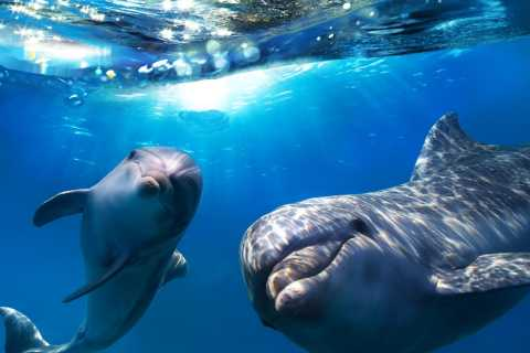 Gran Canaria: Delfin- und Walbeobachtungstour