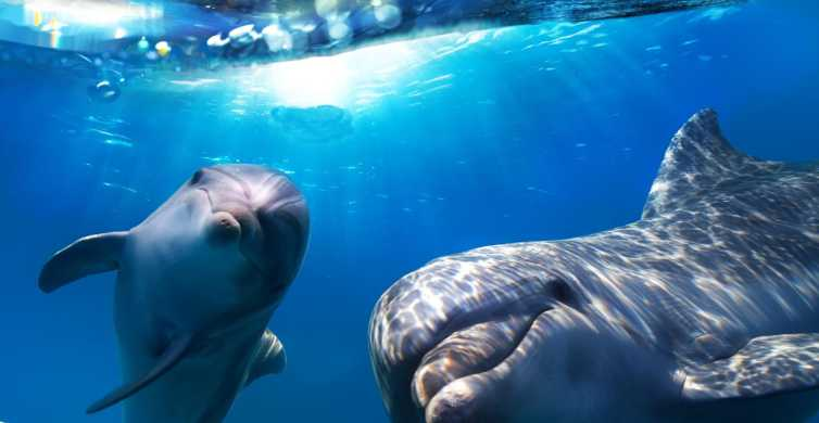 Gran Canaria: Dolphin and Whale Watching