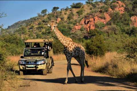 Ab Sun City: Pirschfahrt durch den Pilanesberg-Nationalpark