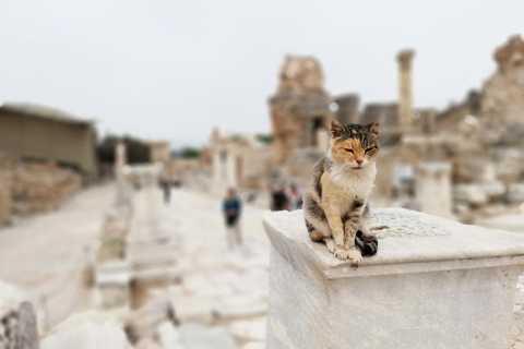 Türkei: Istanbul und Ephesus 5-Tage-Tour