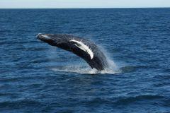 Reykjavík: Excursão de Observação de Baleias