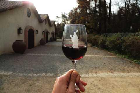 Santiago: Concha y Toro and Undurraga Vineyards Tour