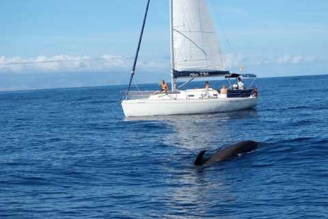 Tenerife: Whale & Dolphin Watching with Drinks and Snacks