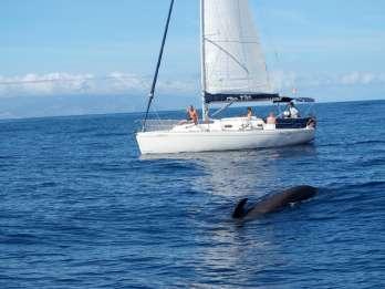 Teneriffa: Wal- & Delfinbeobachtung mit Snacks und Getränken
