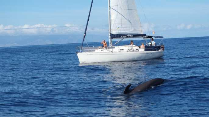 Crucero de yates de lujo con avistamiento de ballenas y delfines