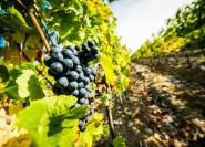 Toskana: Ganztägige Wein- und gastronomische Tour in kleiner Gruppe von ...