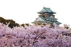 Osaka: tour diurno em flor de cerejeira e gastronomia