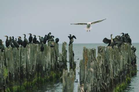 Baltic Sea Coast and the Jūrmala Seaside Resort (1 Day)