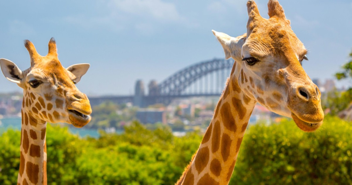 Taronga Zoo: Exclusive 90-Minute VIP Tour