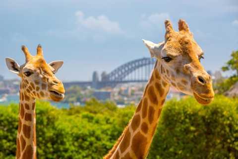 Taronga Zoo: 90-Minute VIP Tour